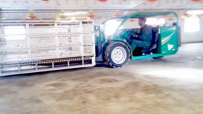 Forklift poultry chicken growing industry small