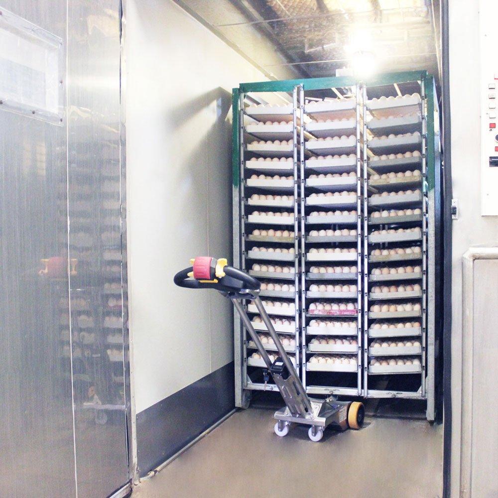 macchina per trasporto gabbie uova in incubatrice commerciale di incubatore industriale